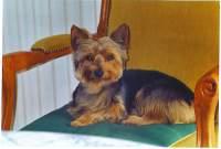 Portrait de Sety